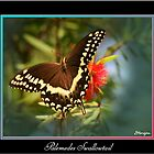 Palemedes Swallowtail by Julie's Camera Creations <><