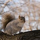 Squirrel at the park by Gleb Zverinskiy