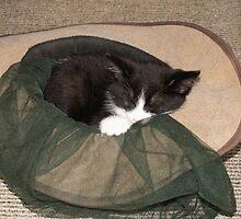 cat in the hat by Paul Buckley