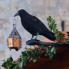 Jackdaw Lamp Holder.......... by lynn carter