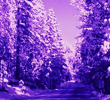 Purple Forest by Cheyenne