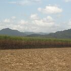 Sugarcane fields by HannahKate