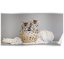 2 Tabby Kittens in Yarn Basket Poster