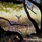 Young Deer in the Wild by Rosalie Scanlon