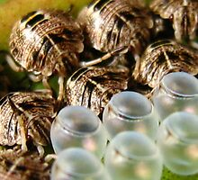 hatchlings by Belinda Cottee