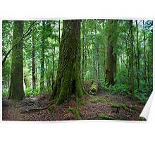 Temperate Rain Forest, Hellyer Gorge, Tasmania, Australia. Poster