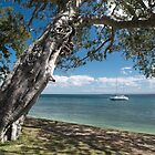 The Old Fig - On Bribie Island by Barbara Burkhardt