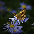 Insects and Flowers by Bobby McLeod