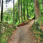 Pathway in the forest. by crackerjack