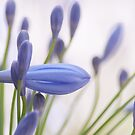 Sophisticate purple, flowers by Kornrawiee
