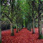 An Avenue of trees by Chris  Munday