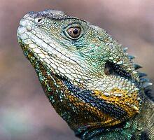 Eastern Water Dragon profile by DaveBassett