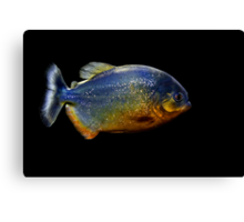 Piranha Beauty Canvas Print