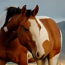 Horse Near Spanish Fork Utah by Ryan Houston