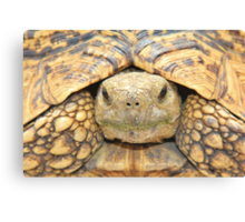 Tortoise Stare - Serious Intimidation of Fun Canvas Print