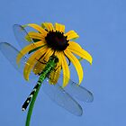 Dragonfly Sky by Rock Mollica