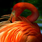 Flamingo Flow by Rock Mollica