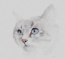 Sonsy - Silver Grey Cat by Bamalam Art and Photography