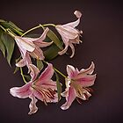 Lilies #3 by Elaine Teague