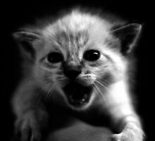 Scaredy-Cat by Ryan Houston