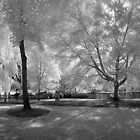 Boston Lagoon Infrared 2 by Troy Dodds