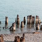 Old Pilings Port Huron Michigan by marybedy