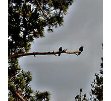 Birds on a tree branch Photographic Print