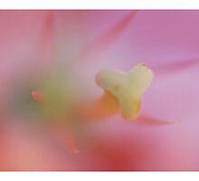 Softness in lite by JetsetAphrodite