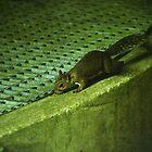 Squirrel by monotonouslangour