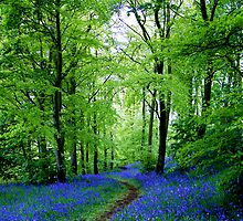 Scottish Bluebells by Euan Christopher