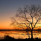 Lone Tree at Daybreak by Bonnie T.  Barry