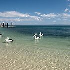 Pelicans Playground - Bongaree Jetty by Barbara Burkhardt