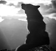 Lone Wolf by kiddruba