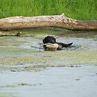 Duck Dog by ahedges