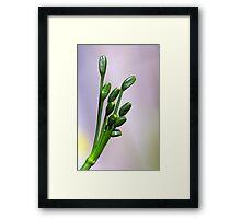 Jonquil seeds Framed Print