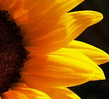 Sunflower by Jacq Wilson