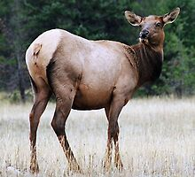 Feme Elk by Tiffany Vest