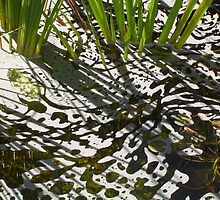 Pond by itzme