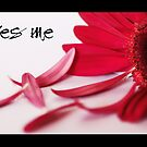 Loves me...loves me not by Sharon Hammond