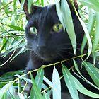 Like Jungle by Lori H