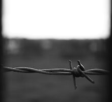 A Barbed View in Monochrome by Debbie Black