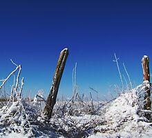 Snowy Fenceposts by amandameans