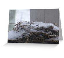 winters nest Greeting Card