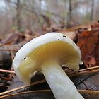 Small White Mushroom  by ChuckBuckner