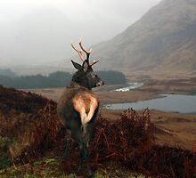 Monarch of Glen Etive by Roddy Atkinson