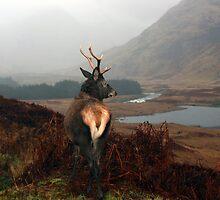 Monarch of Glen Etive by Roddy Atkinson