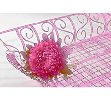 Aster In Tray - Digital Artwork Photographic Print