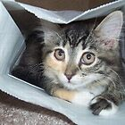 Cat in a Bag by SandoPhotos