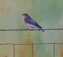 Wren on a wire by Faye Doherty