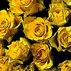 Yellow roses by ninamsc